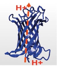 H. pyloris OMPLA kan være involvert i protontransport