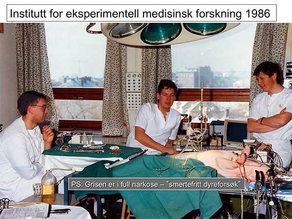 """Fra stipendiat-tiden: Forsøk med anestesert gris, sammen med gjester fra """"Fysiologien"""" i Gøteborg.  Claes Jønsson (venstre) leder nå Det Svenske Landsregisteret for Pancreascancer."""