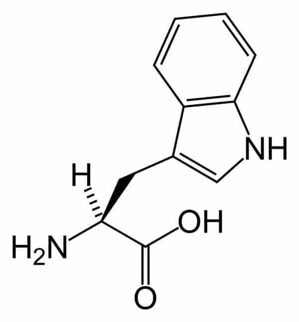 Figur 1. Tryptofan, kjemisk formel. Ringstrukturene viser at den er «aromatisk».
