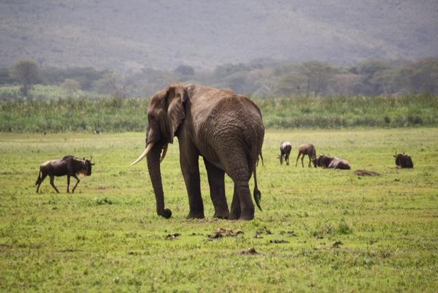 Etiopia har mye å by på, blant annet et spennende dyreliv.